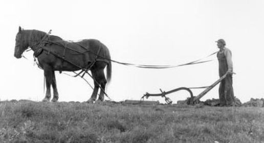 horse-drawn-plow