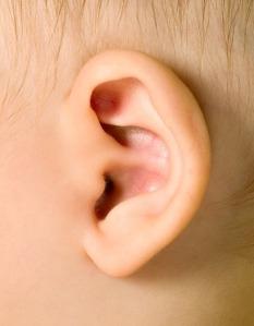 baby-ear