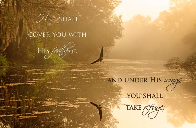 he-shall-cover-you-with-his-wings