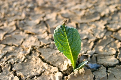 Image result for dry weary land